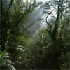 La Forêt de Sherwood