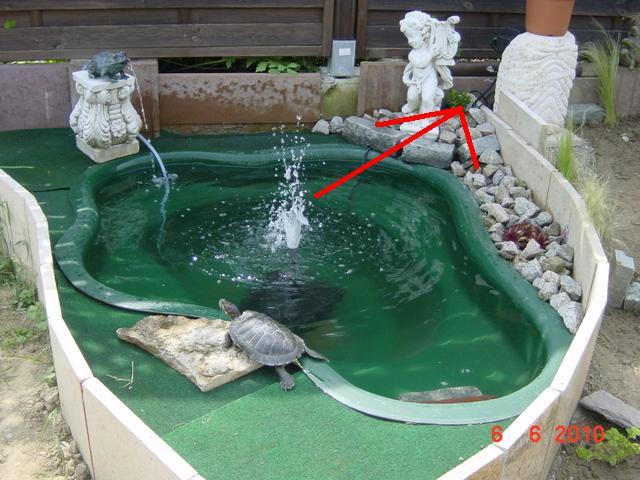 Mon bassin for Bassin exterieur pour tortue de floride