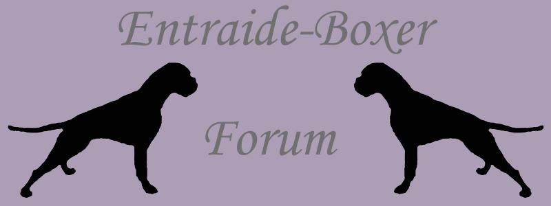 Entraide-Boxer