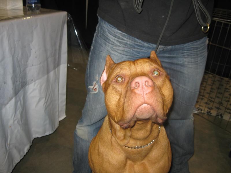 Afficher le sujet salon des chiens pure race de qu bec for Salon chat sexe