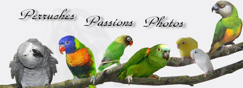 Perruche - Passions - Photos & co