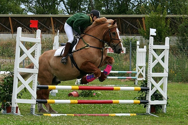 Obstacle percheron 1 forum cheval - Frison saut d obstacle ...