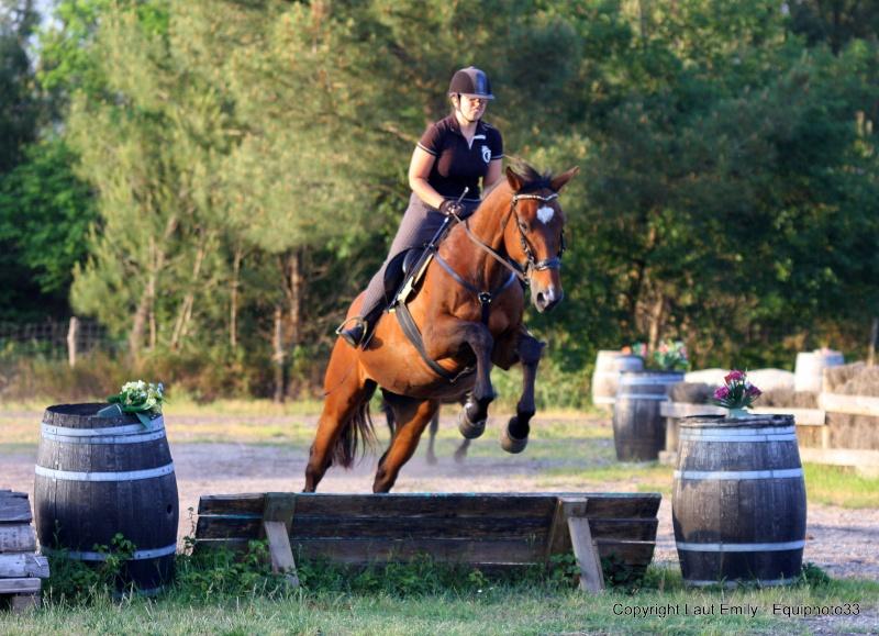 poney 2 cce hauteur