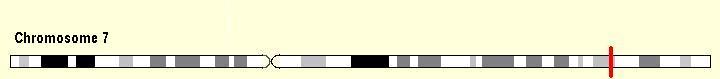 Chromosome 7