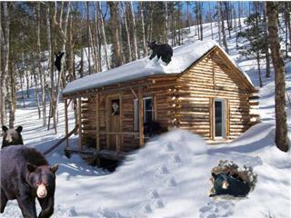 Constrution en bois rond for Camp en bois rond