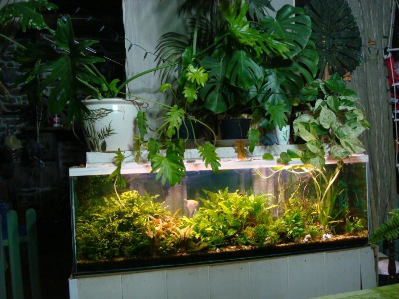 l 39 eau qui fait buller mes plantes. Black Bedroom Furniture Sets. Home Design Ideas