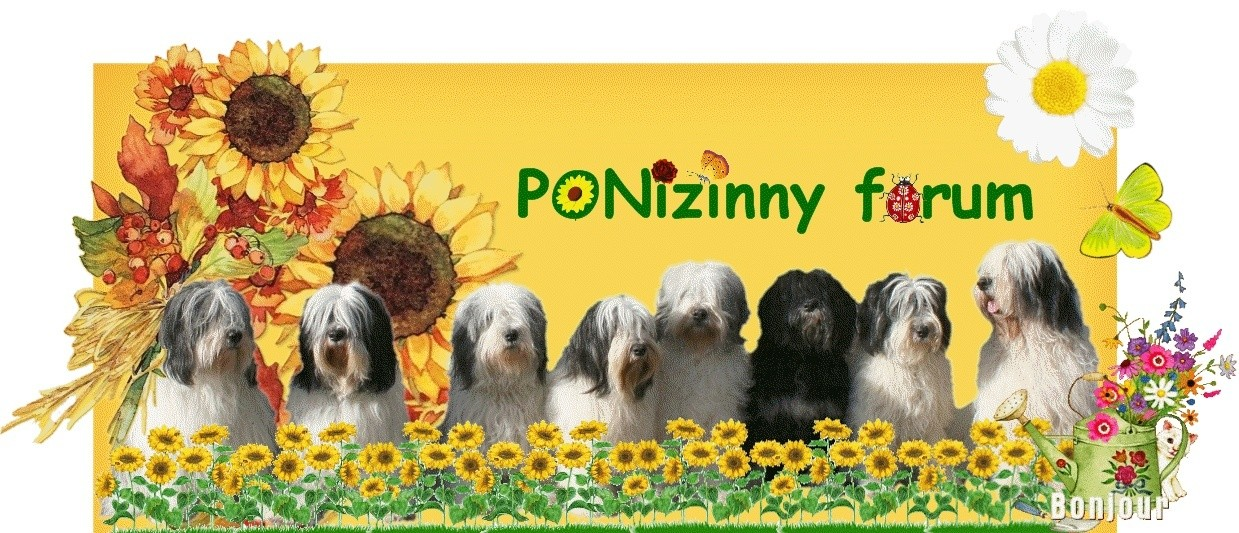 P.O.NIZINNY forum