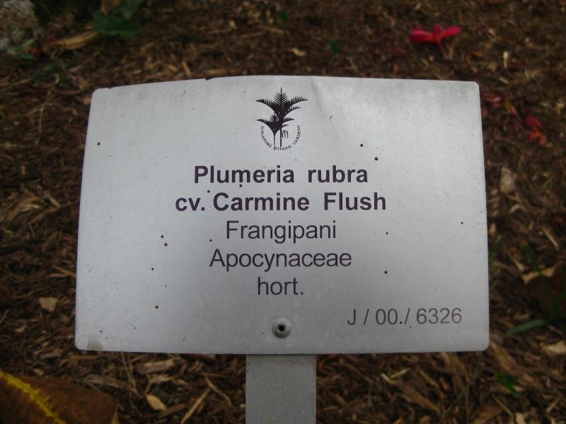 Plumeria du jardin botanique de singapoure for Vente de plantes par correspondance