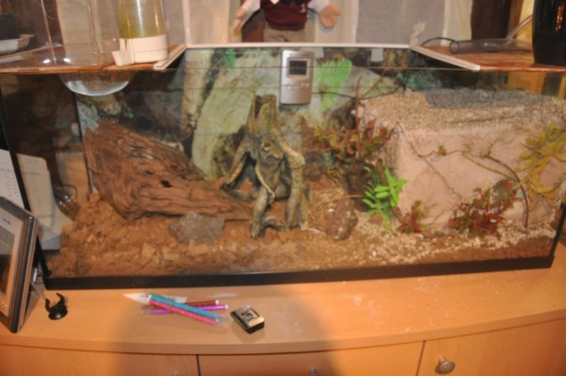 Tuto terra pour mes acromyrmex crassipinus fourmis for Construire un aquarium