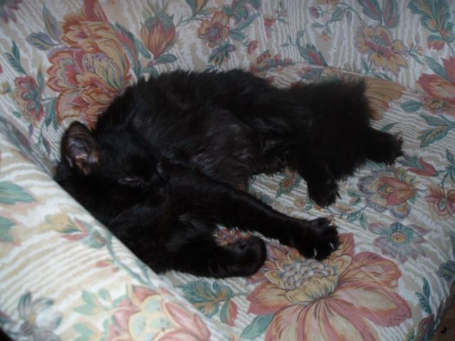 Fantax cassis angora noir 1 an page 4 - Chat fait pipi sur le lit ...