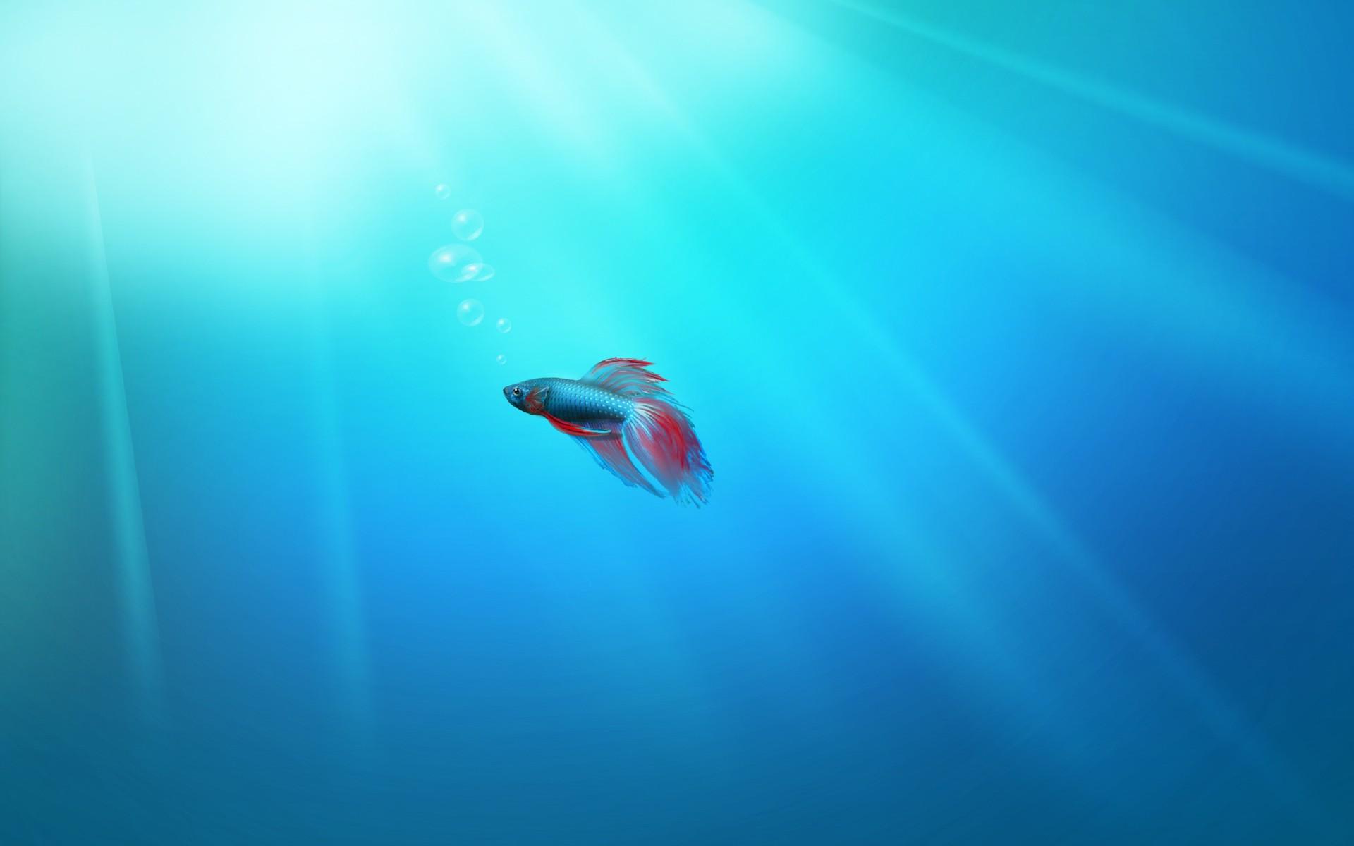 fish marlin desktop 1920x1200 - photo #47