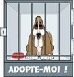 http://i63.servimg.com/u/f63/13/33/80/92/chiens10.jpg