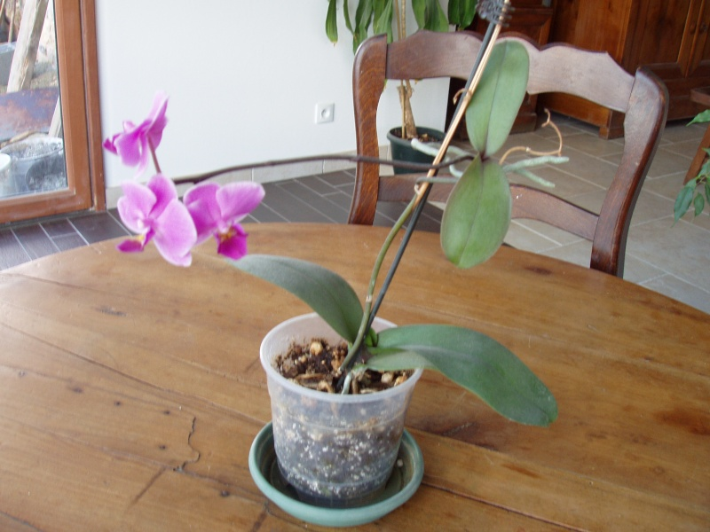 un rejeton sur une tige d 39 orchid e. Black Bedroom Furniture Sets. Home Design Ideas