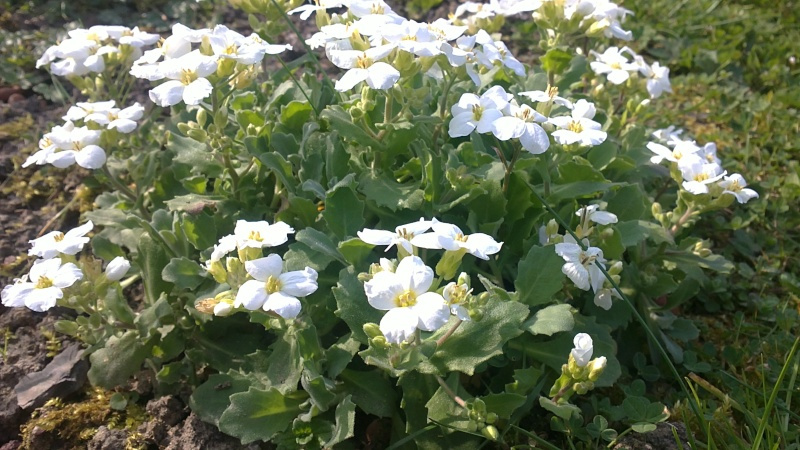 Floraison des plantes et arbuste for Plantes et arbustes