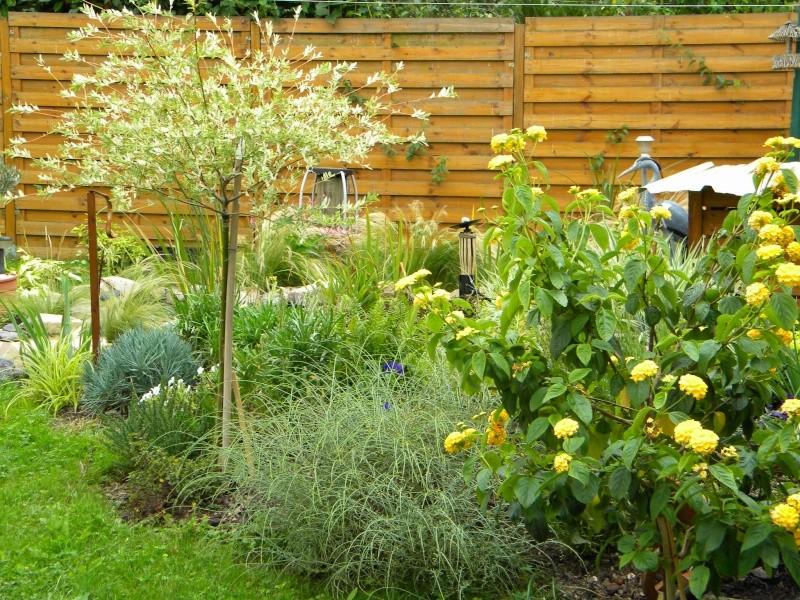 Floraison des plantes et arbuste - Quand tailler un saule crevette ...