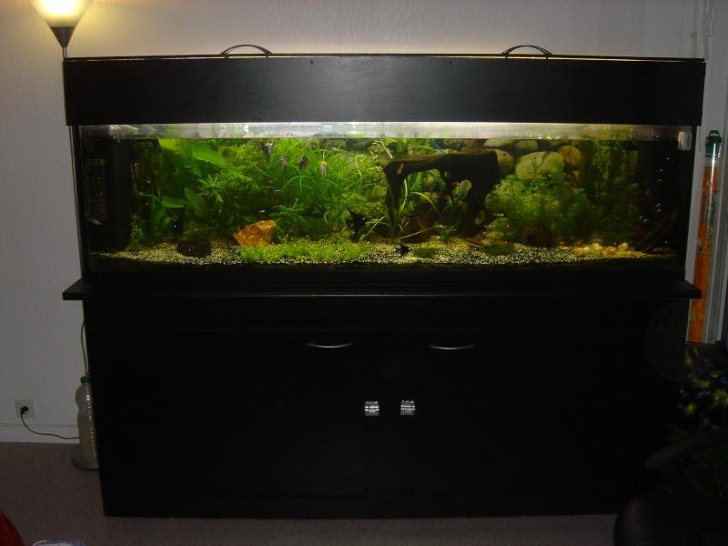 Vends aquarium 600 litres 200x50x60h for Aquarium 50 litres occasion