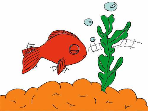 Pas pas poisson rouge poisson clown drawny for Poisson rouge a donner