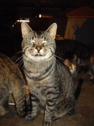 atos chat tigr 233 pot de colle et calin d environ 3 4 ans
