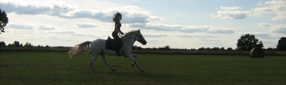 Верхом по Мещёре - HorsesBB.ru
