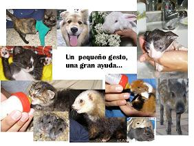 Protectora d'animals domèstics i exòtics