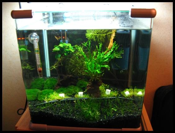 comment faire un gazon dans mon aquarium. Black Bedroom Furniture Sets. Home Design Ideas