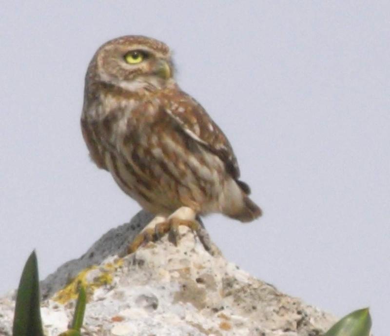 Reconnaitre les oiseaux de nos jardins page 5 for Oiseaux de belgique reconnaitre