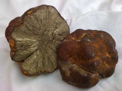 Marcassite tomb e dans mon jardin - Prix d une meteorite ...