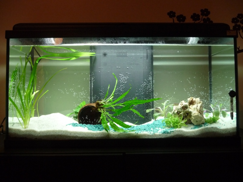 90 litres mon premier vrai aquarium avec de vrai poisson. Black Bedroom Furniture Sets. Home Design Ideas
