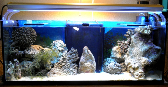 Aquarium eau de mer annecy for Eau de mer aquarium