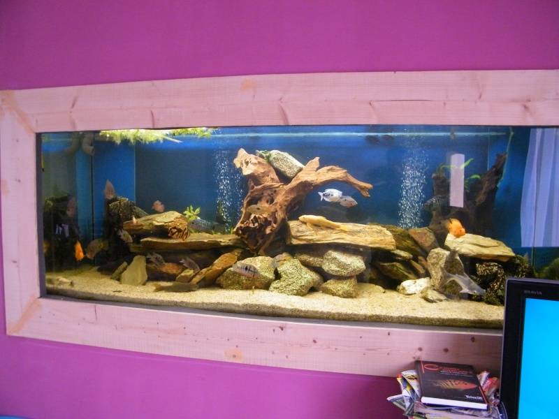u en uw aquarium aquarium 850l en cichlid 233 s centre am. Black Bedroom Furniture Sets. Home Design Ideas
