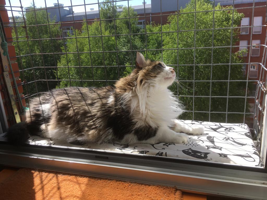 Esperanza Felina Ningún Gato Sin Hogar Blog Archive Cómo Proteger A Nuestros Gatos Mosquiteras Y Redes